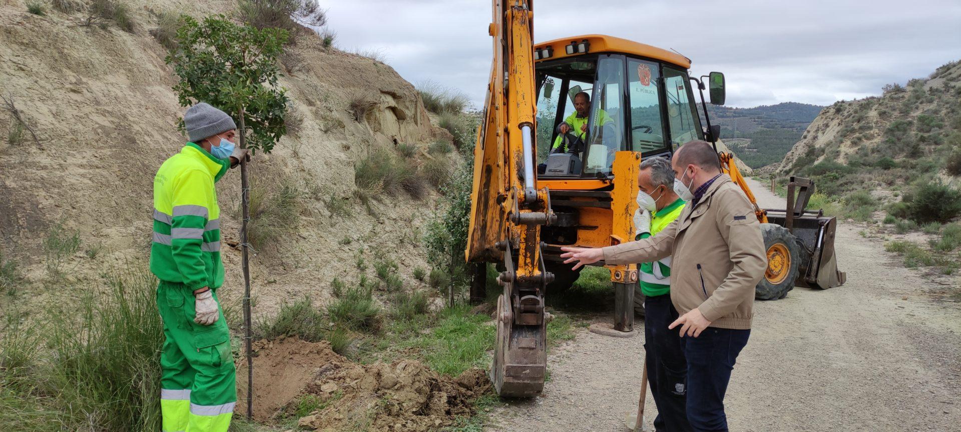 El Ayuntamiento de Huércal-Overa planta 800 árboles en distintos puntos del término municipal procedentes del Plan SAVIA
